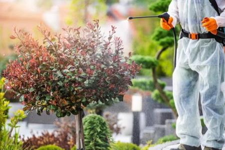 защита деревьев и кустарников от вредителей
